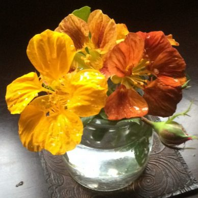 Nasturtiums in glass