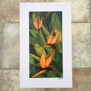 Strelitzia Bird of paradise signed print