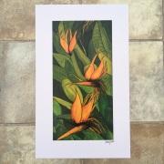 Strelitzia Bird of paradise signed print